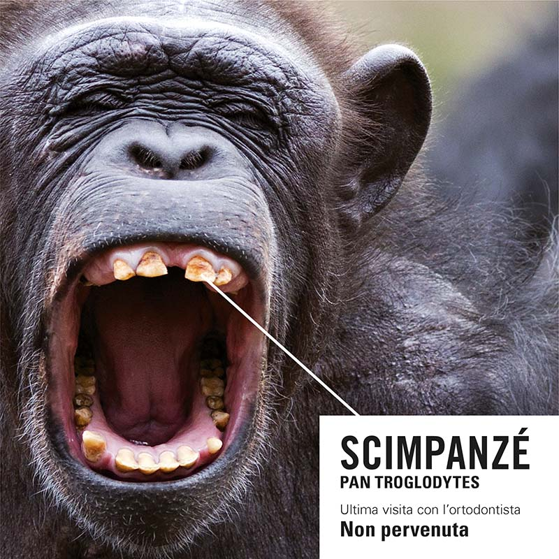 Dental Più Campagna Animali Scimpanzè